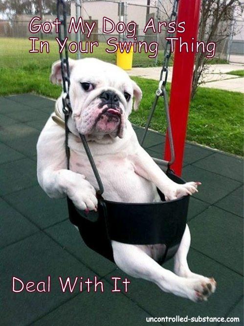 DogArssSwingThing