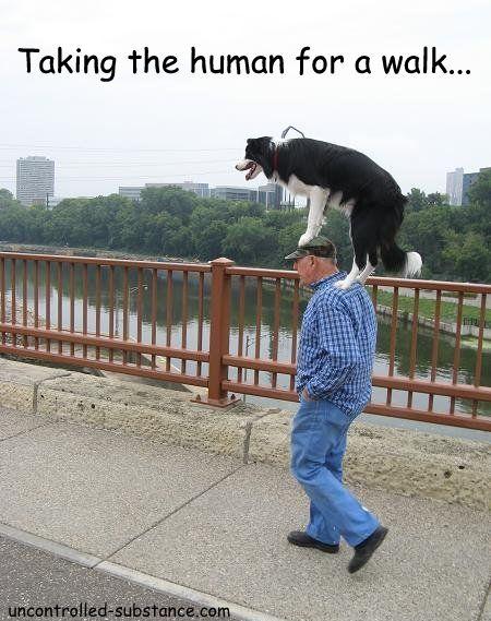 Walking The Human