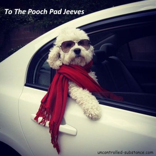 To The Pooch Pad