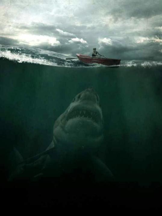 Shark Treat