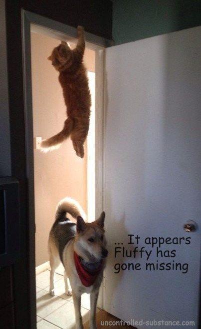 Fluffy Gone Missing