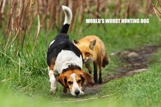Worlds Worst Hunting Dog
