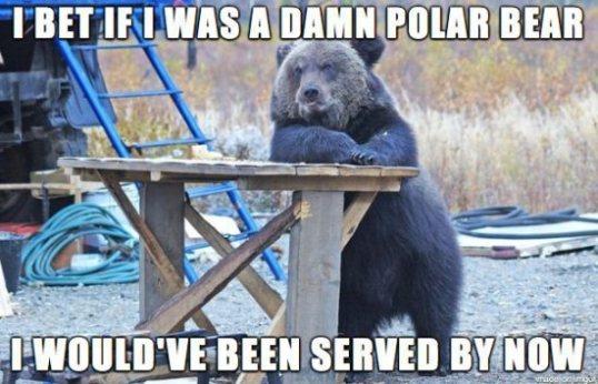 Damn Polar Bear
