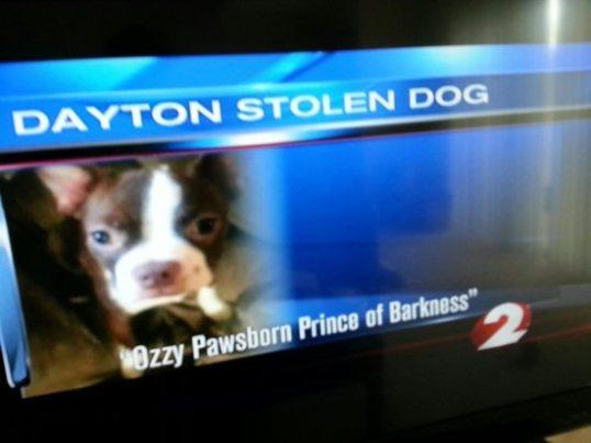 Ozzy Pawsborn